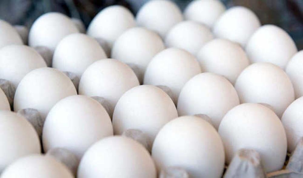 تخم مرغ 24 عددی